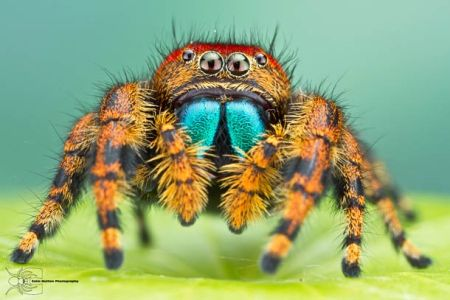 Les photos macro fascinantes d'insectes de Colin Hutton (galerie) 62