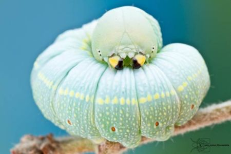 Les photos macro fascinantes d'insectes de Colin Hutton (galerie) 72