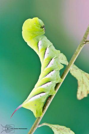 Les photos macro fascinantes d'insectes de Colin Hutton (galerie) 81