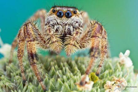 Les photos macro fascinantes d'insectes de Colin Hutton (galerie) 9