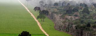 Déforestation en Amazonie pour la construction de nouvelles routes / © Getty Images