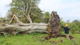 Sligo-Leitrim Archaeological Services.