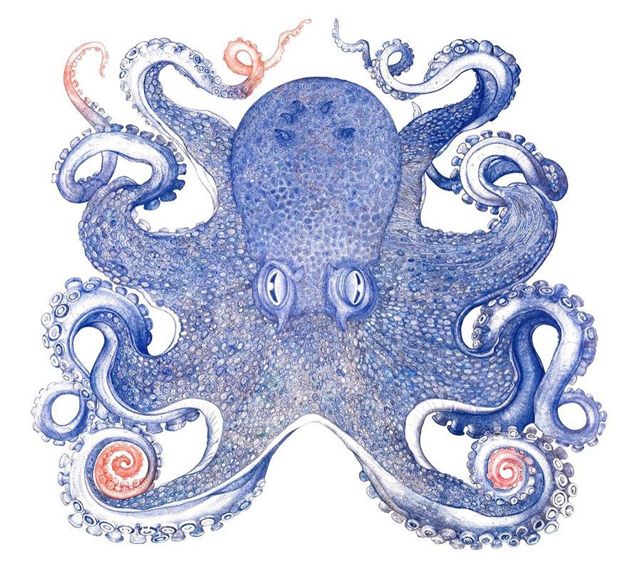 Un artiste passe une ann e pour dessiner une pieuvre avec for Artiste dessin