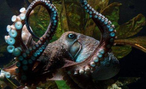 L'animal avait été confié à l'aquarium par des pêcheurs qui l'avaient remonté dans leurs filets.
