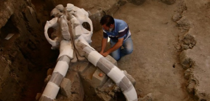 L'archéologue mexicain Luis Cordoba exhume un crâne de mammouth à Mexico, le 24 juin 2016 (c) Afp