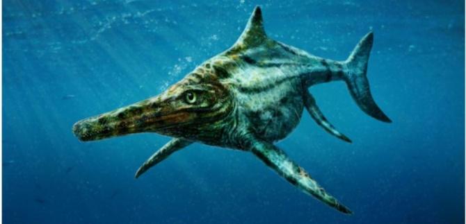 Image numérique diffusée par l'université d'Edimbourg le 11 janvier 2015 montrant un dessin d'artiste d'un reptile marin Dearcmhara shawcrossi identifié à partir de fossiles trouvés sur l'île de Skye et ayant vécu il y a 170 millions d'années (c) Afp