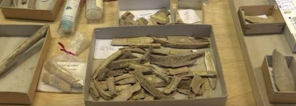 Plusieurs os humains montrent des traces de découpe. (Photo: AFP)