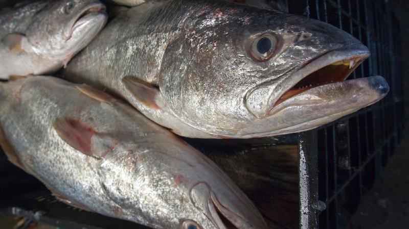 poissons vides datant service de rencontres glockmeister