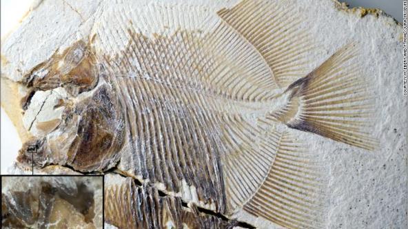 Découverte d'un « piranha » datant du Jurassique (vidéo) By Jack35 125