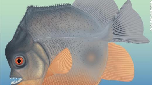 Découverte d'un « piranha » datant du Jurassique (vidéo) By Jack35 24