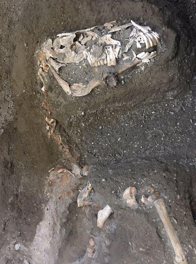 Pompéi : un cheval enseveli découvert dans les ruines (vidéo) By Jack35 Capture2