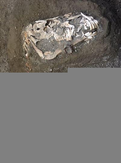Des fossiles remplis d'opales révèlent de nouvelles espèces de dinosaures (vidéo) By Jack35 Capture2