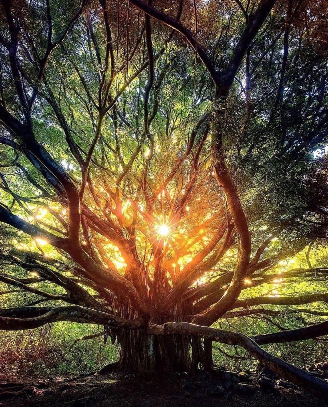 L'image du Jour : Au coeur de la forêt de Maui, Hawaï ! (Vidéo sur Bidfoly.com) By Jack35 1-31