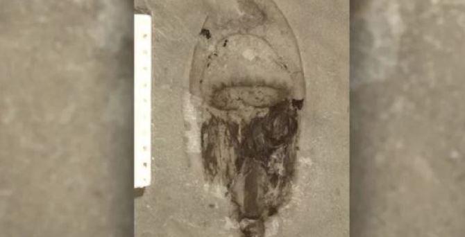 Un nouveau site de fossiles étranges en Chine (vidéo) By Jack35 Capture-29