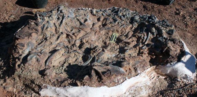 Découverte d'un cimetière de dinosaures «impressionnant» en Argentine (vidéo) By Jack35 Capture-16