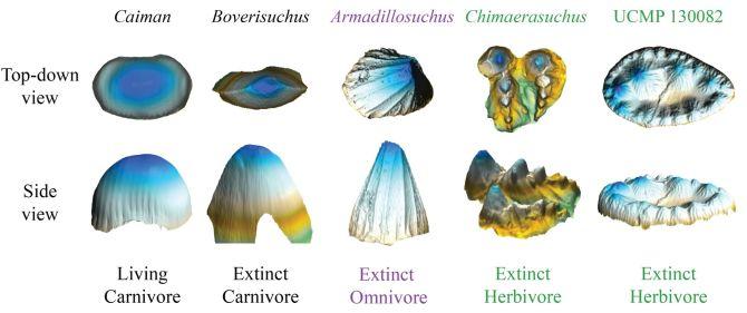 Des dents fossilisées suggèrent que certains crocodiles anciens étaient végétariens (vidéo) By Jack35 1-80