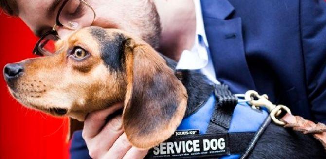 États-unis : des chiens anti-stress au chevet des anciens combattants (vidéo) By Jack35 Capture-26