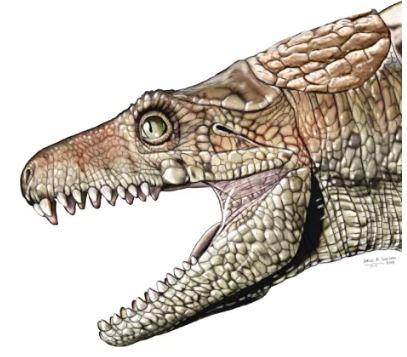 Des dents fossilisées suggèrent que certains crocodiles anciens étaient végétariens (vidéo) By Jack35 Capture-27