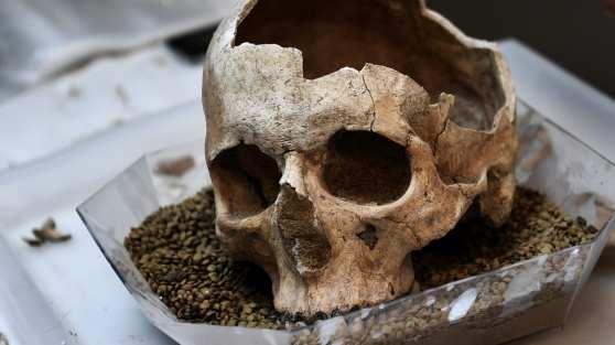 L'Homo sapiens est arrivé en Europe bien plus tôt qu'on ne le pensait (vidéo) By Jack35 1-44