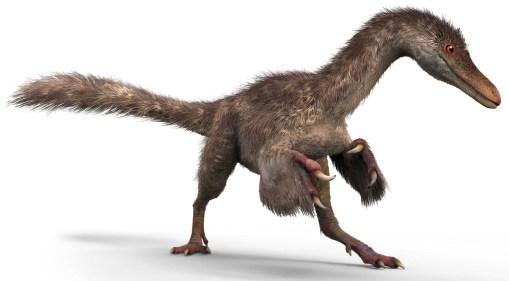 Les dinosaures avaient-ils vraiment des plumes ? (vidéo) By Jack35 1-62