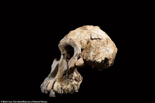 On a trouvé le grand-père de notre ancêtre Lucy l'australopithèque (vidéo) By Jack35 1-74