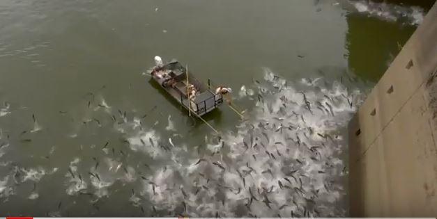 Ils installent un système pour bloquer les poissons envahissants (vidéo) By Jack35  Capture-1