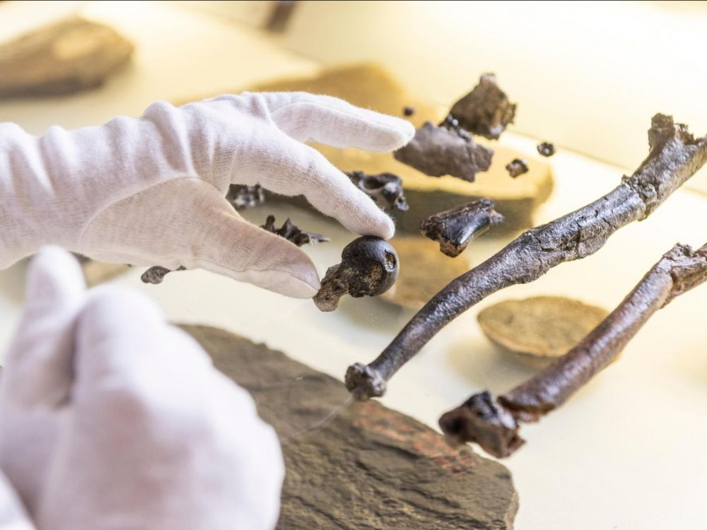 Les fossiles antiques récemment découverts peuvent constituer le «chaînon manquant» entre les singes et les humains (vidéo) By Jack35 1-16