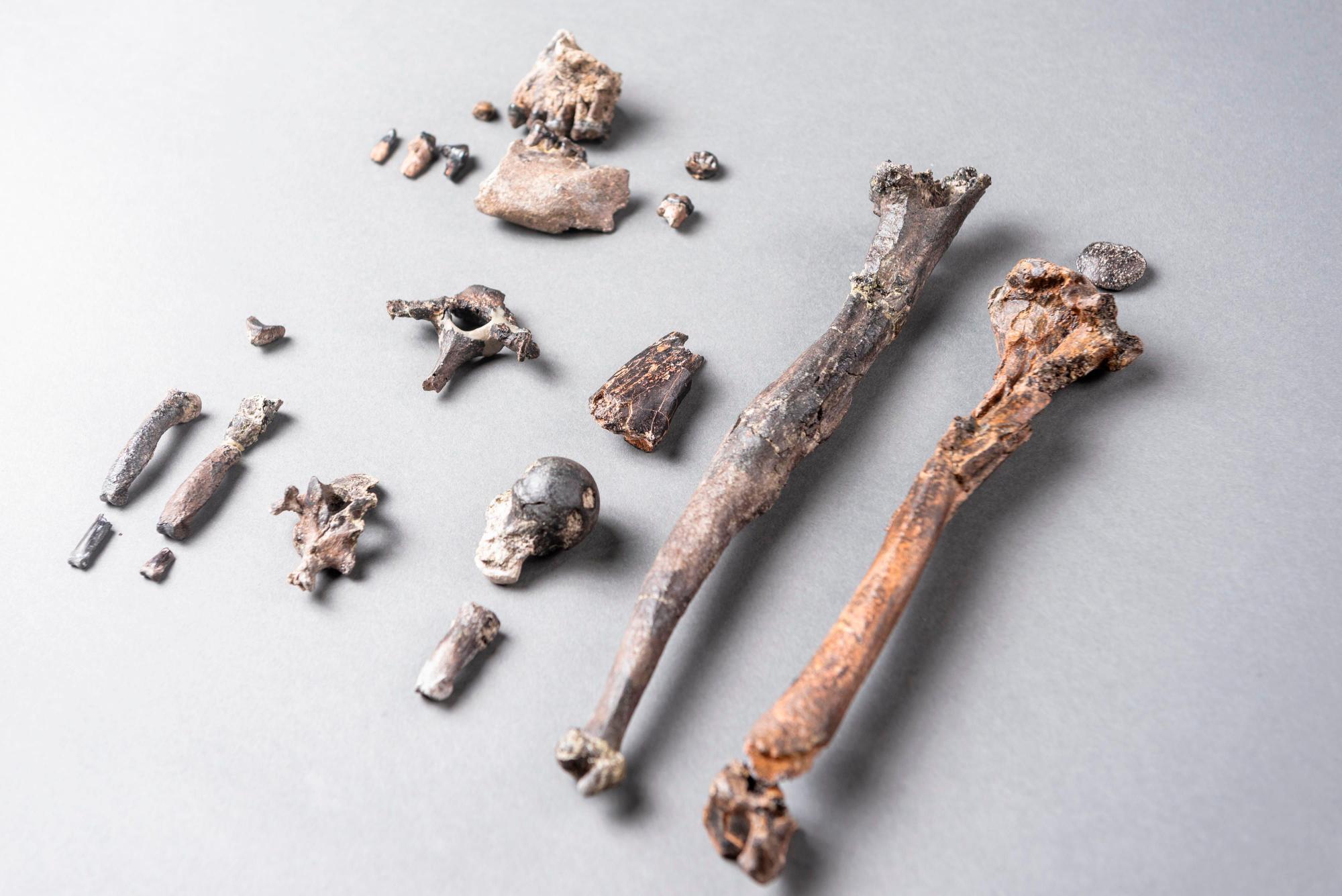 Les fossiles antiques récemment découverts peuvent constituer le «chaînon manquant» entre les singes et les humains (vidéo) By Jack35 2-4