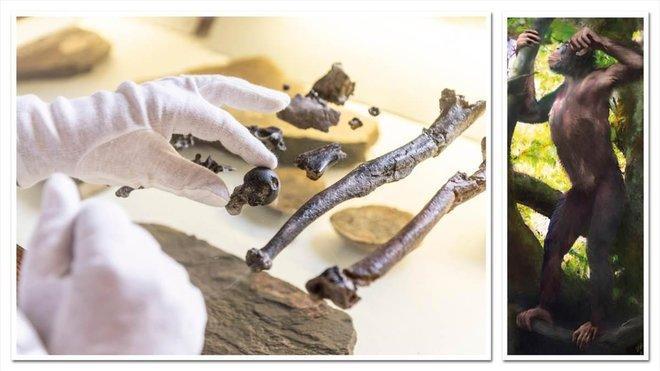 Les fossiles antiques récemment découverts peuvent constituer le «chaînon manquant» entre les singes et les humains (vidéo) By Jack35 3-4