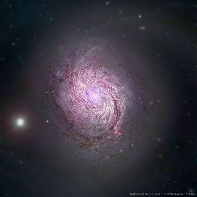 L'image du jour : Les champs magnétiques de la galaxie spirale M77, NGC 1068 (vidéo) By Jack35 1-62