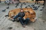 Superbes portraits d'humains et d'animaux (galerie et vidéo) BY Jack35 9-1
