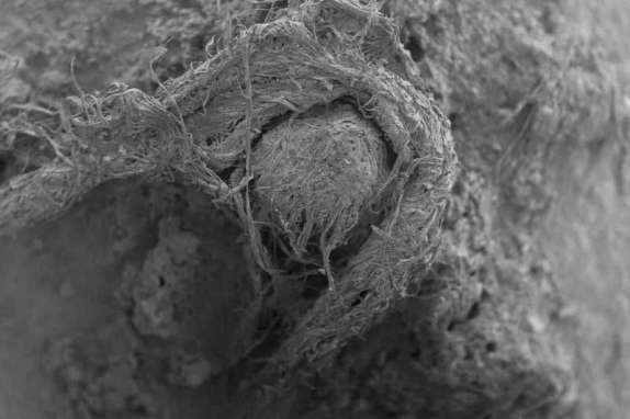 Une corde tissée par Néandertal découverte dans une grotte en France (galerie et vidéo) By Jack35 1-37
