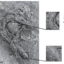 Une corde tissée par Néandertal découverte dans une grotte en France (galerie et vidéo) By Jack35 Capture2