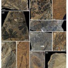 L'estomac d'un dinosaure le mieux conservé jamais découvert révèle le dernier repas du «  dragon endormi  » (galerie et vidéo) By Jack35 6-3