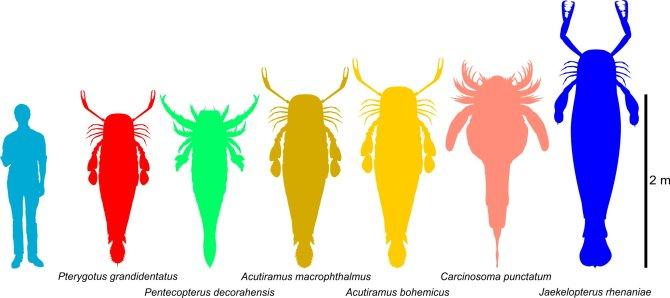 Des scorpions de mer gigantesques, certains plus grands que les humains, chassés dans les océans antiques (vidéo) By Jack35 2-3