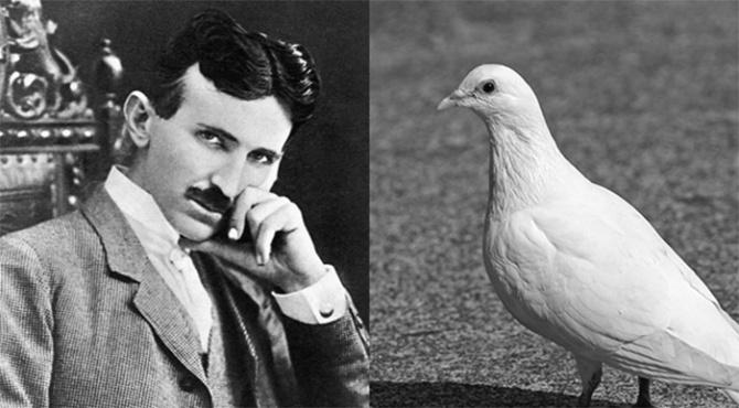 Obsession étrange de Nikola Tesla avec les pigeons (vidéo) By Jack35 1-19