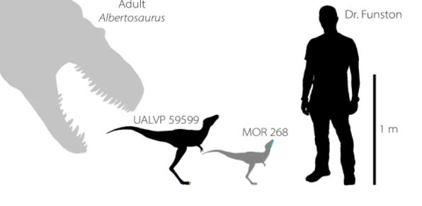 Les premiers fossiles de tyrannosaures de leur genre découverts (vidéo) By Jack35 Capture-26