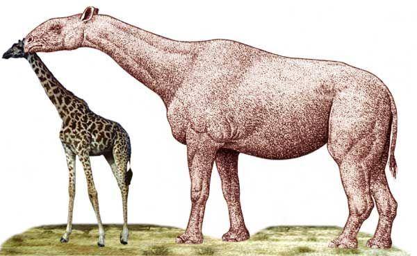 Quel a été le plus grand animal terrestre ? (vidéo) By Jack35 1-17