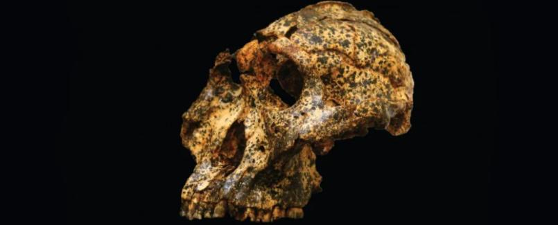 Cet ancêtre humain éteint a évolué pour faire face au changement climatique, mais n'a pas survécu (vidéo) By Jack35 Capture-10
