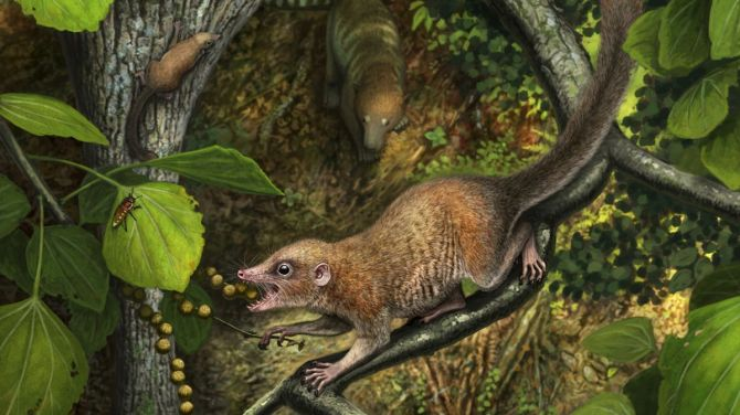 L'ancêtre primat de tous les humains a probablement erré avec les dinosaures (vidéo) By Jack35 1-16