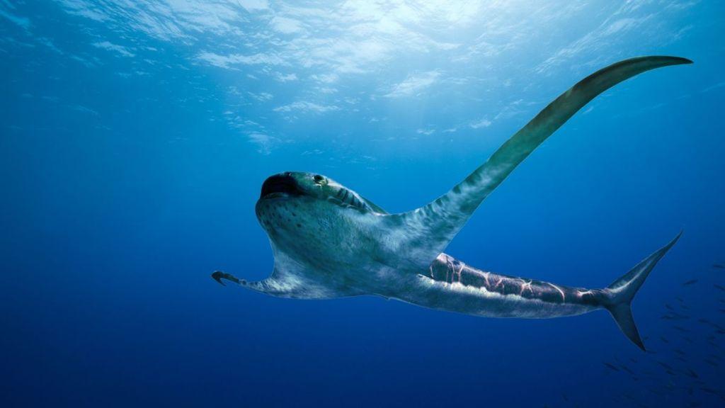 Découverte d'un requin « ailé » qui a traversé les océans il y a 93 millions d'années (vidéo) By Jack35 1-58
