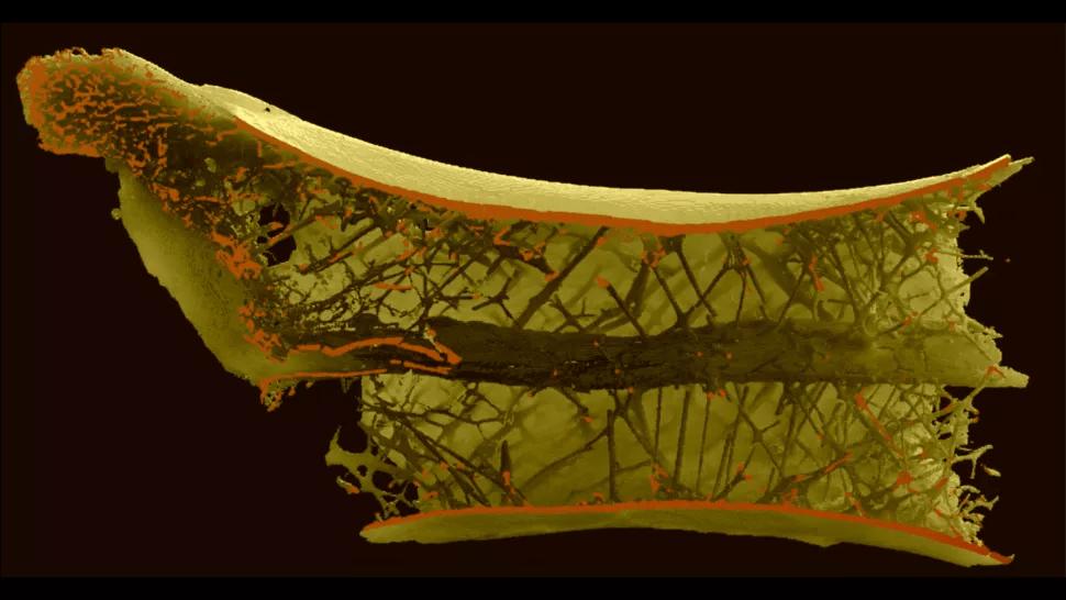 Comment les plus grands dinosaures volants supportaient leur cou démesuré (diaporama et vidéo) By Jack35 2-1