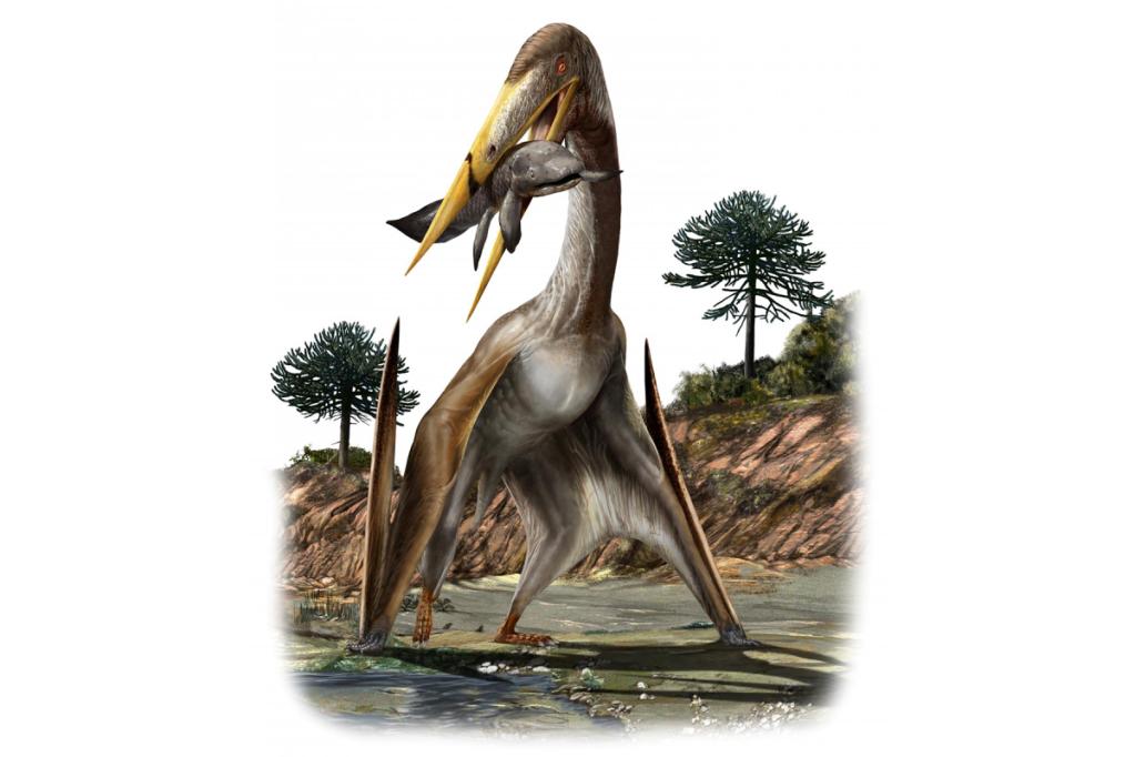 Comment les plus grands dinosaures volants supportaient leur cou démesuré (diaporama et vidéo) By Jack35 3-2