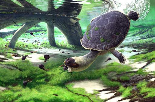 Des Fribourgeois découvrent une tortue qui aspirait ses proies (diaporama et vidéo) By Jack35 1-43