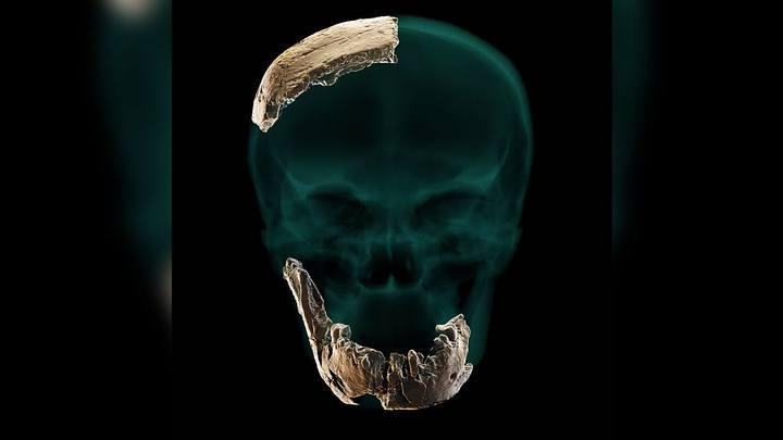 Ancêtre humain inconnu déterré en Israël. Il avait de grandes dents mais pas de menton (vidéo) By Jack35 1-81